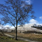 a single tree, a snow capped mountain, a feeling of being in between